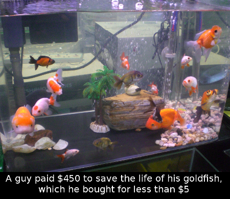 HK_Aquarium_Plaza_Quarry_Bay_Goldfish_society